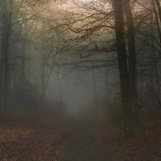 fogpinterest
