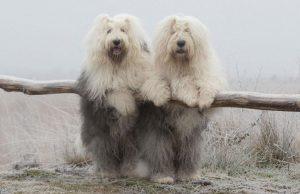 pinterestdog