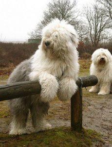 pinterstdog1