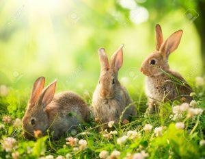 bunniesinM